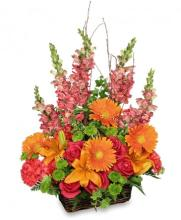 BRILLIAN BASKET ARRANGEMENT
